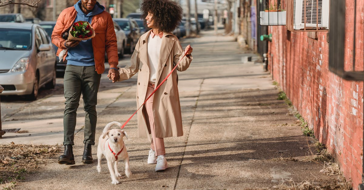 A person and a dog walking on a sidewalk